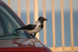Bird Droppings